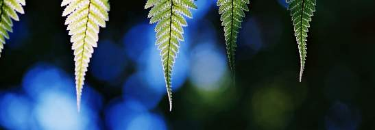 Waitomo District ferns image